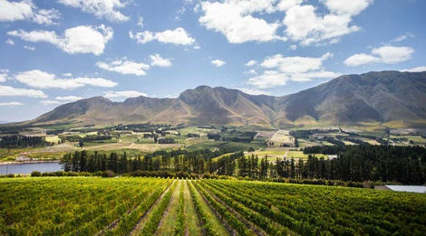 Legendary Cape Winelands day tour from Cape Town