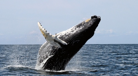 Whales & Wines Tour
